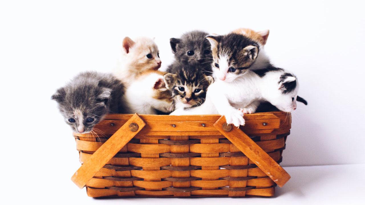 Cat Appy