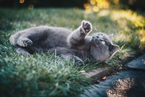 grey cat lying in grass looking at the sky